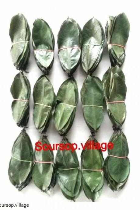 Shadow Dried Soursop Graviola Annona Muricata - 100 Leaves