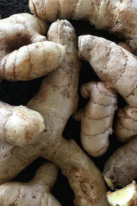 Rare Curcuma Amada ( Mango Ginger/Amba Haldi ) Fresh Root-bulb/Seeds for Growing 9 Rhizomes